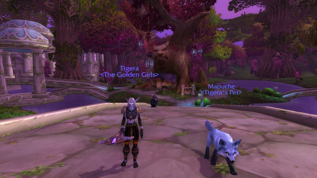 Tigera, Wendy's Level 92 Night Elf Beast Mastery Hunter with Fox Mapuche